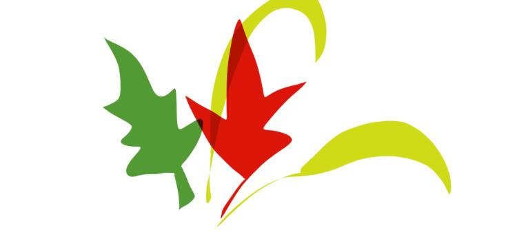 Science Fridays 2020-2021: Autumn Leaves