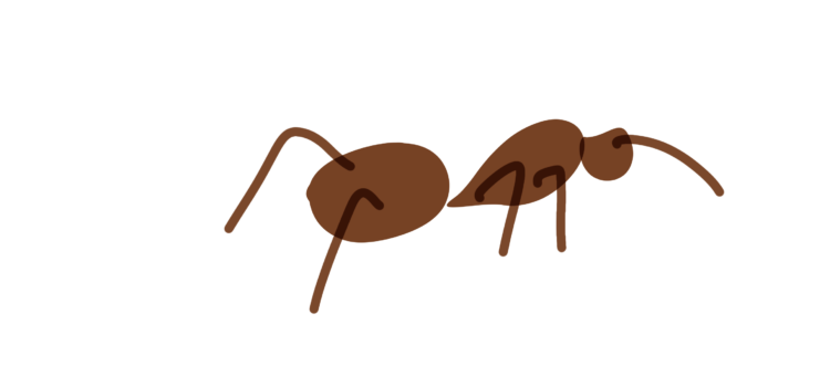 Science Fridays 2020-2021: The Ants Go Marching